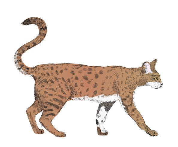 Ilustración dibujo estilo de gato