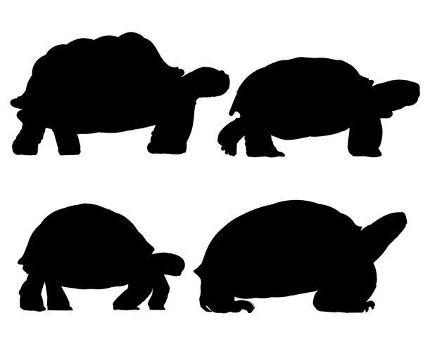 Illustrationszeichnungsart der Schildkröte