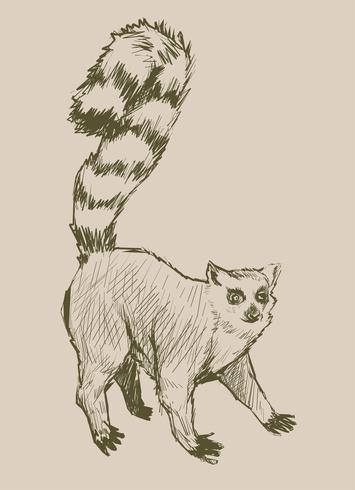 Estilo de desenho de ilustração de macaco