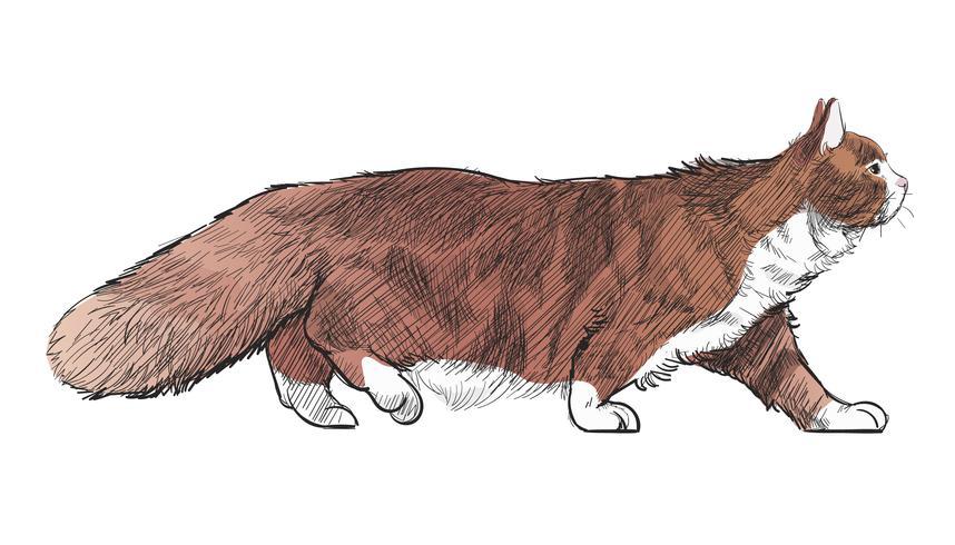 Animals Illustration Vector Art Set
