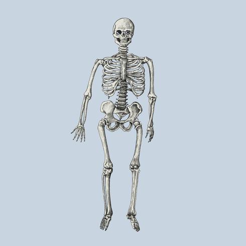 Desenhado à mão sktech de um esqueleto humano