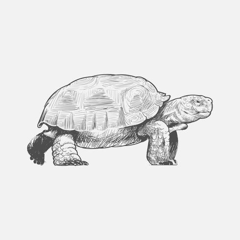 Estilo de desenho de ilustração de tartaruga