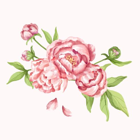 Dibujado a mano ilustración de flor de peonía rosa
