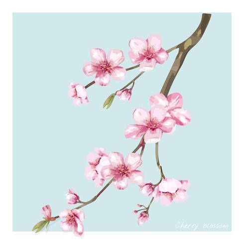 Illustrazione disegnata a mano del fiore del fiore di ciliegia