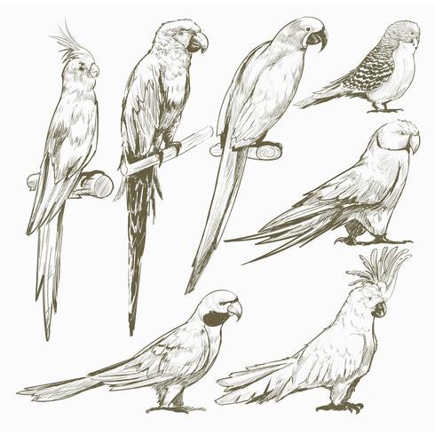 Ilustración de dibujo estilo de colección de aves loro.