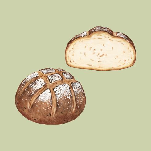 Illustrazione disegnata a mano di pane a lievitazione naturale appena sfornato