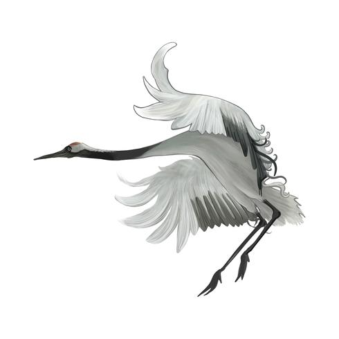 Elegant Japanese red-crowned crane flapping its wings