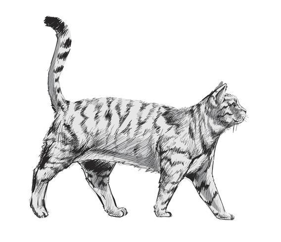 Illustration ritning stil av katt