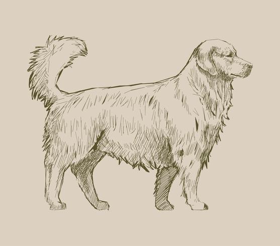 Stile di disegno dell'illustrazione del cane