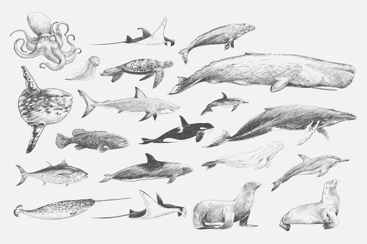 Conjunto de ballenas y focas.
