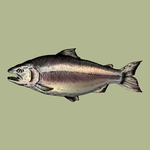 Pesce salmone disegnato a mano