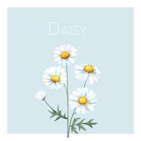 Hand drawn white common daisy