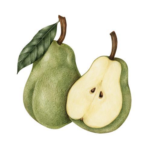 Dibujo estilo ilustración de pera