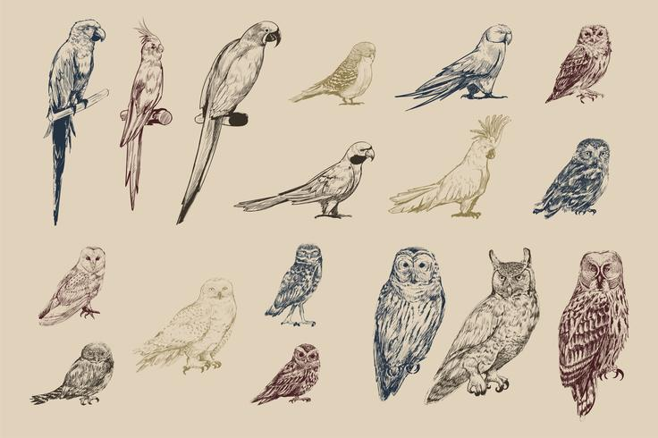 Illustration drawing style of parrot birds collection