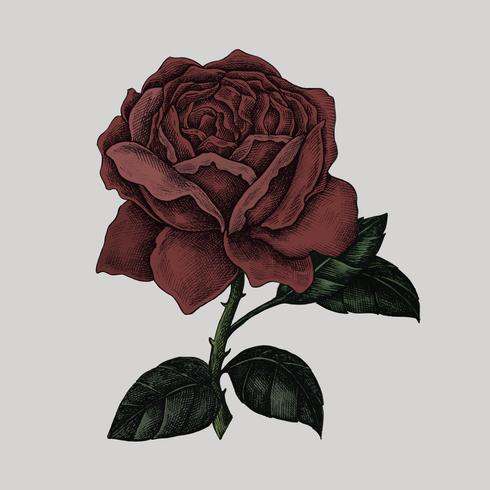 Handgezeichnete frische rote Rose