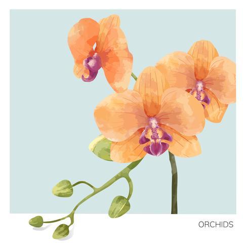 Hand getekend orchideebloem illustratie