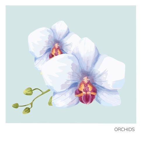 Hand drawn orchid flower print