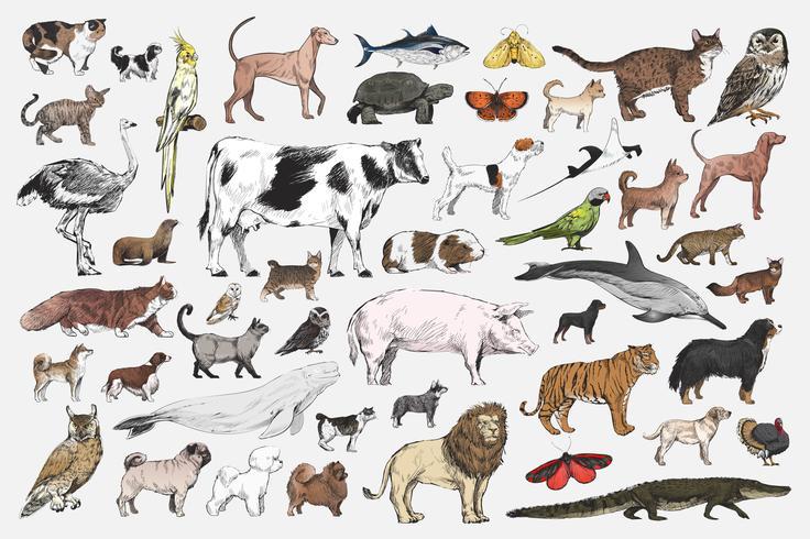 Set di animali misti