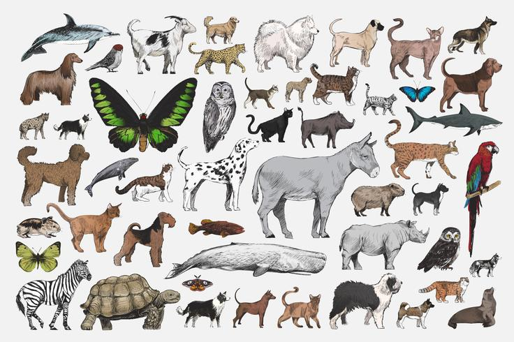 Illustration drawing style of animal collection