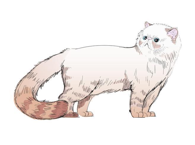 Animales ilustración vectorial conjunto