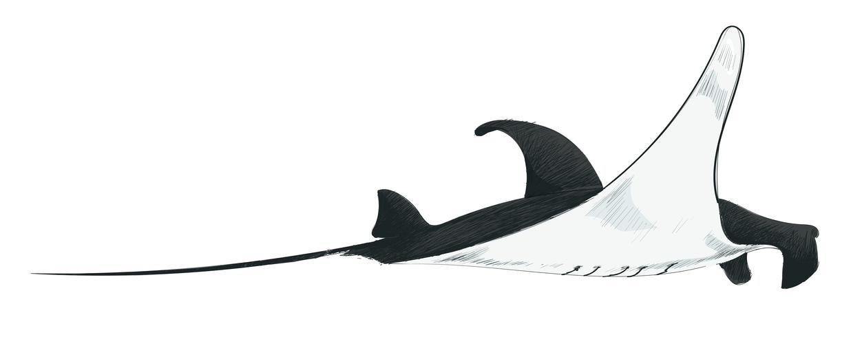 Stile di disegno dell'illustrazione del pesce di mare