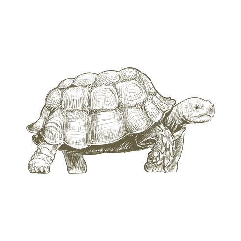 Illustration drawing style of turtle