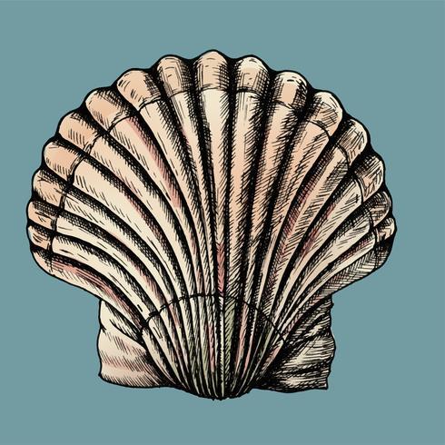 Handgezeichnete Muscheln Muscheln