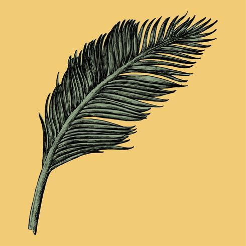 Folha de palmeira desenhada de mão