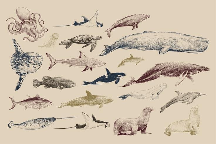 Style de dessin d'illustration de la collection de la vie marine