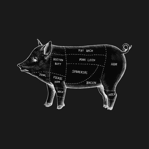 Illustration de différentes parties de cochon