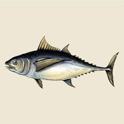 Hand getrokken tonijn