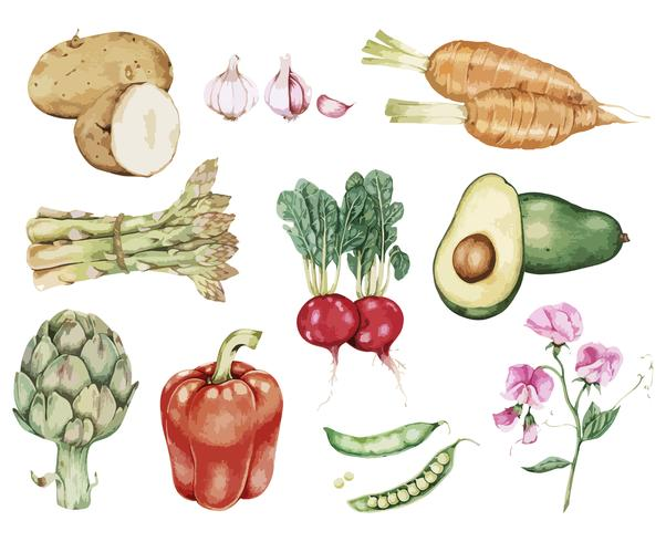 Dibujado a mano vector colección vegetal