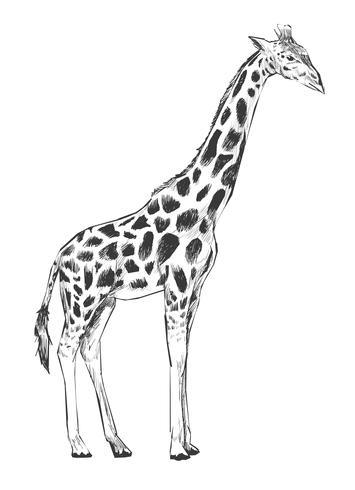 Illustrationszeichnungsart der Giraffe