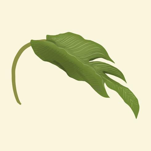 Folha de planta desenhada de mão isolada