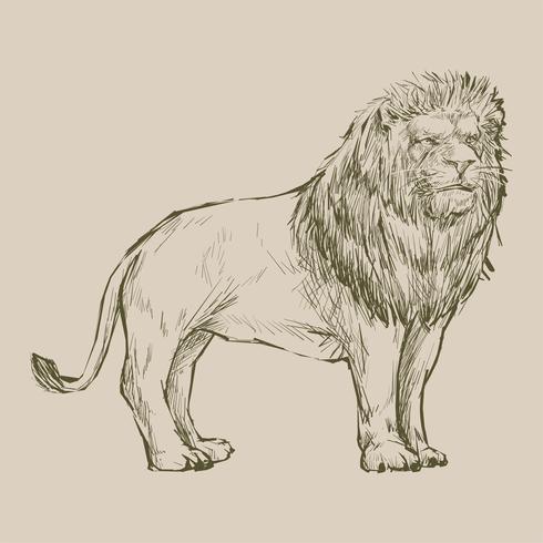 Stile di disegno illustrazione del leone
