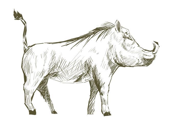 Ilustración de dibujo estilo de cerdo.
