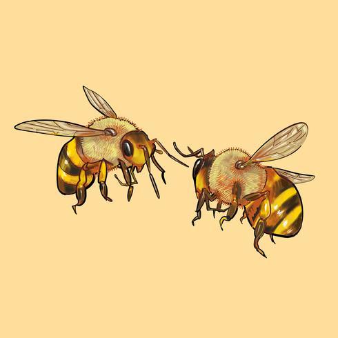 Illustrazione di due api carine
