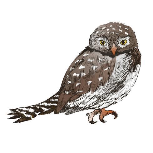 Estilo de dibujo de ilustración de búho