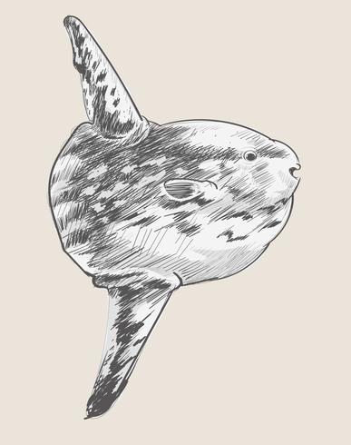 Estilo do desenho da ilustração de peixes de mar por Charles Dessalines D 'Orbigny (1806-1876). Digital reforçada a partir de nossa própria edição de 1892 do Dictionnaire Universel D'histoire Naturelle.