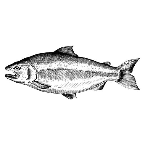 Hand getekend zalm vis
