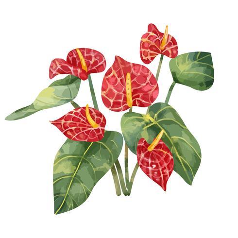 Dibujado a mano flor roja de Laceleaf
