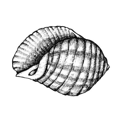 Handgezeichnete Muschelschale isoliert