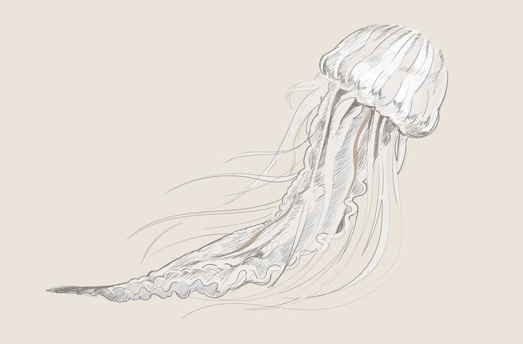 Dibujo estilo ilustración de medusas.