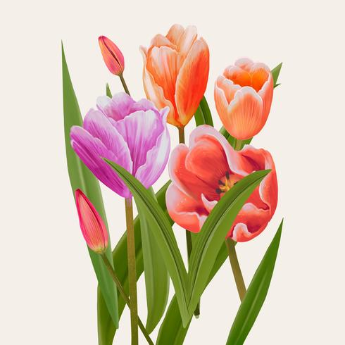 Illustration drawing of Tulip flowers