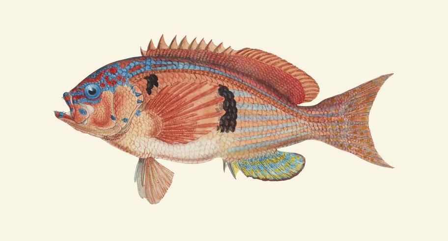 Pesce spinoso
