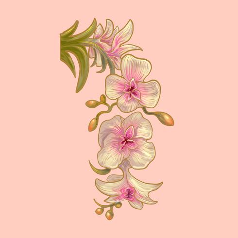 Dibujo de flores de orquidea