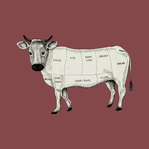 Abbildung von verschiedenen Teilen der Kuh