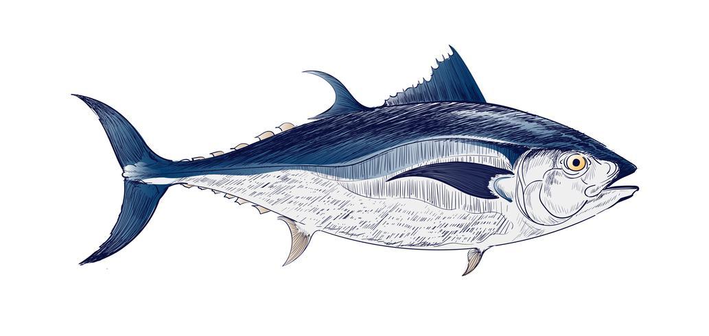 Dibujo estilo ilustración de peces de mar