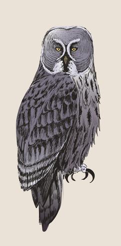 De stijl van de illustratietekening van uil