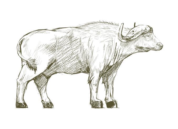 Dibujo estilo ilustración de búfalo.
